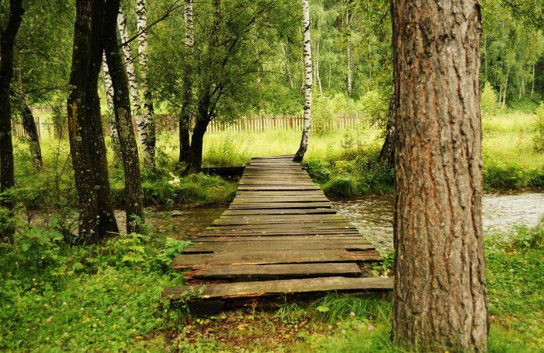 Toward an Authentic Life: Regeneration